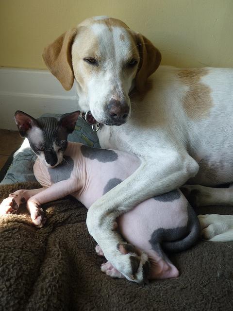 kitty dog friendship