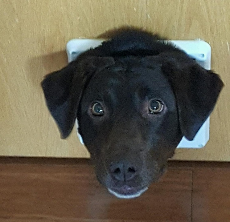 12 Pictures Only Labrador Owners Will Think Are Funny