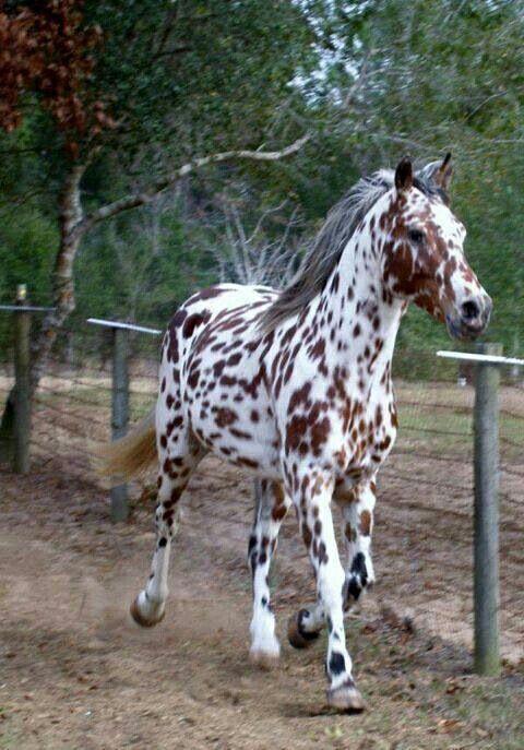 pics horse animal