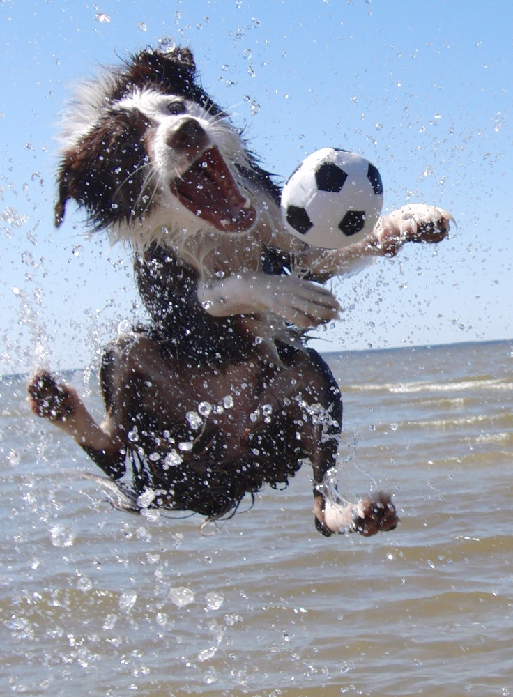 play dog ball water