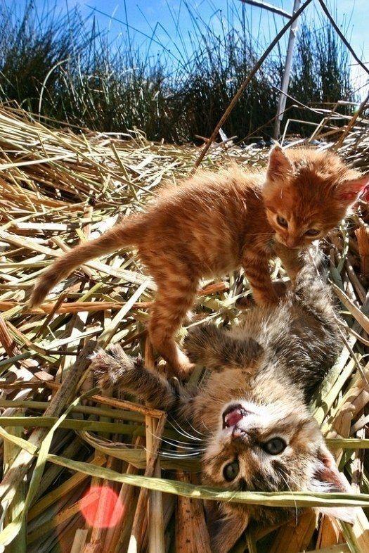 playful kitties cats
