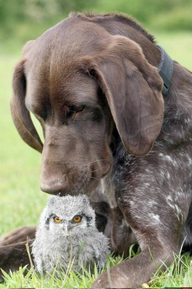 pointer owl bird dog