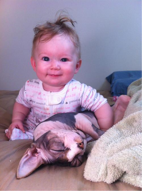 sphynx kitty kid cute