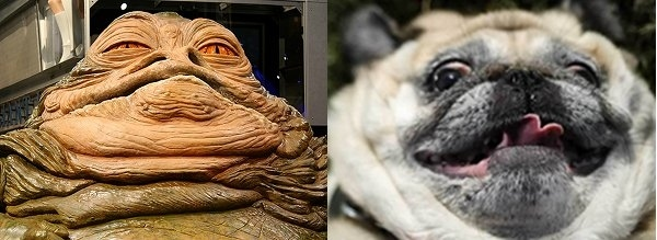 Jabba the Hutt and pug