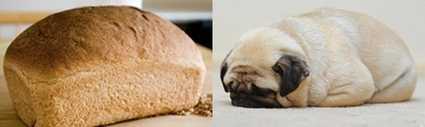 Loaf of bread and pug