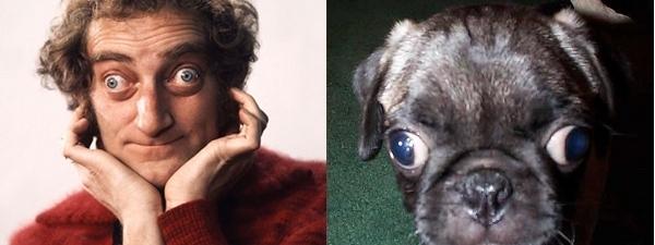 Marty Feldman and pug