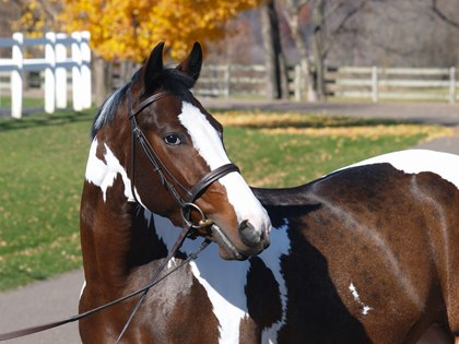 how to tell when your horse is agitated