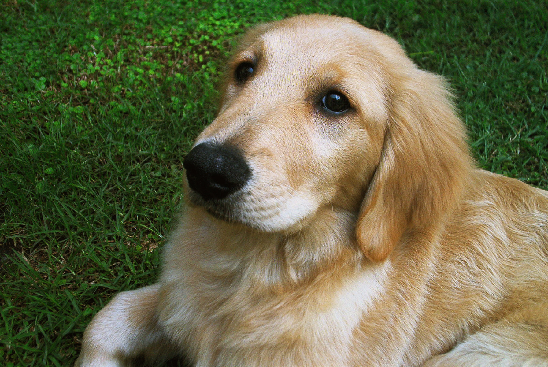 Which President owned a Golden Retriever while serving in the White House?