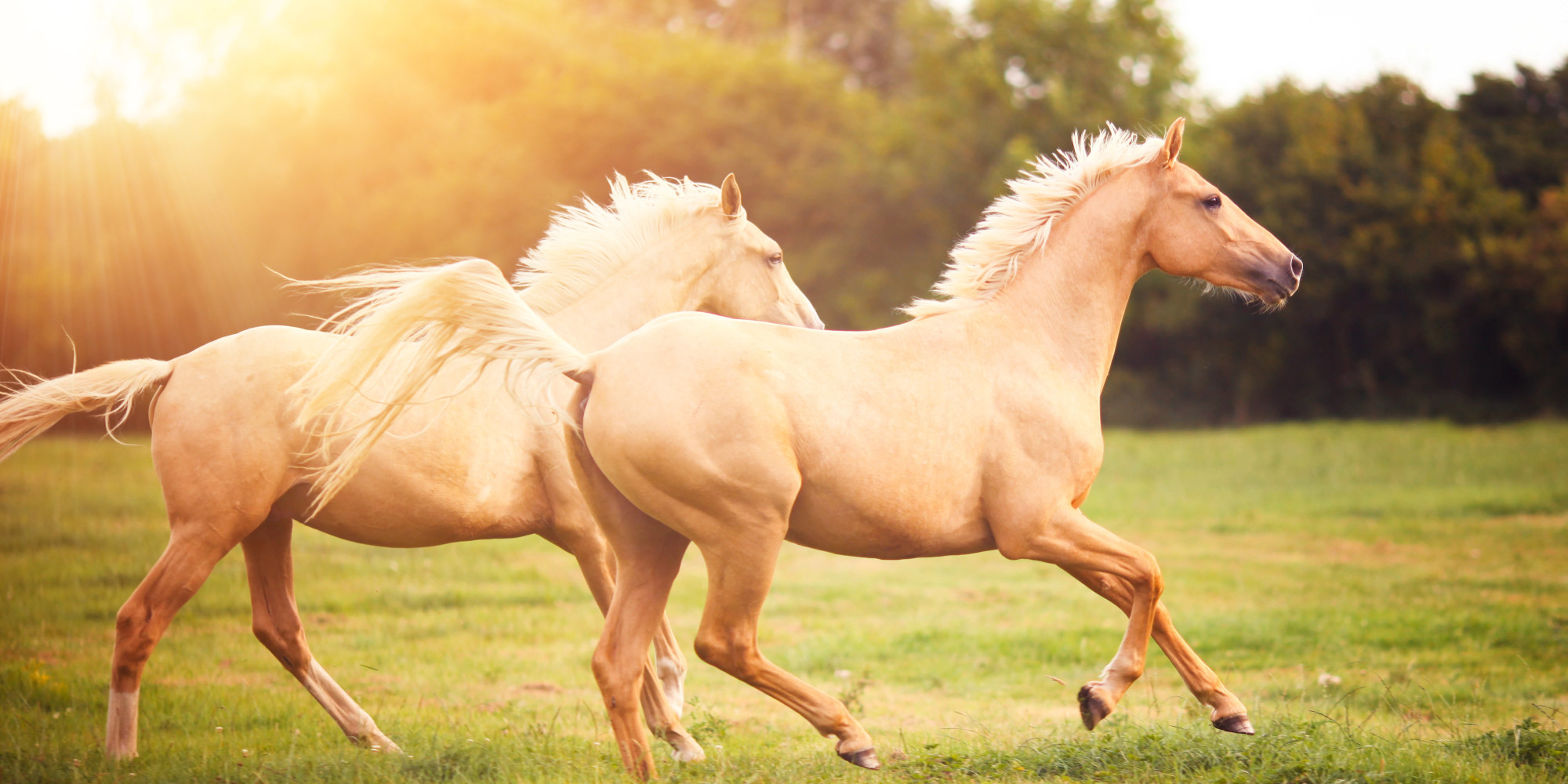 What is the average life span of a horse?