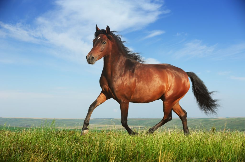According to thoroughbred horse racing, colt and fillies are horses less than ... ?