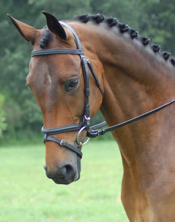 What is the part of the bridle that goes across the horse's forehead or under the forelock?