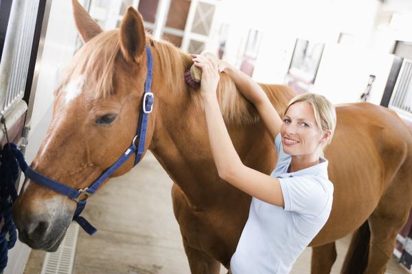 What brush should you never use on your/a horse?