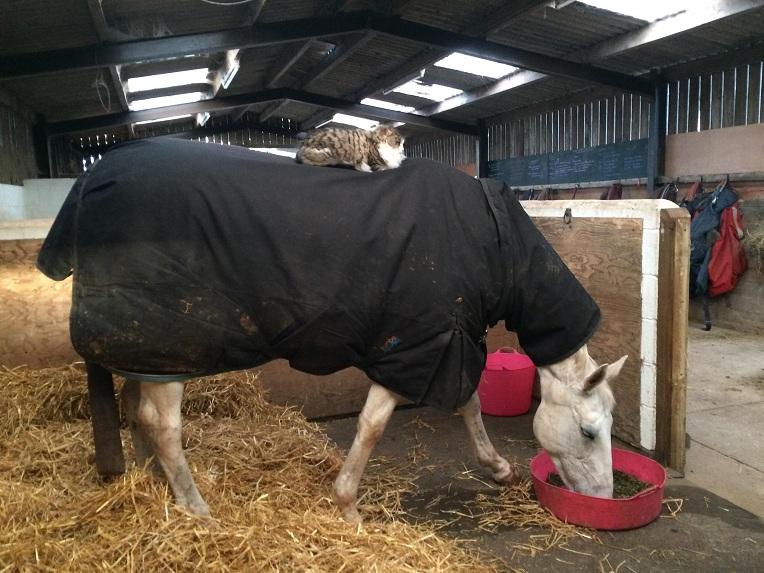 cat and horse fun
