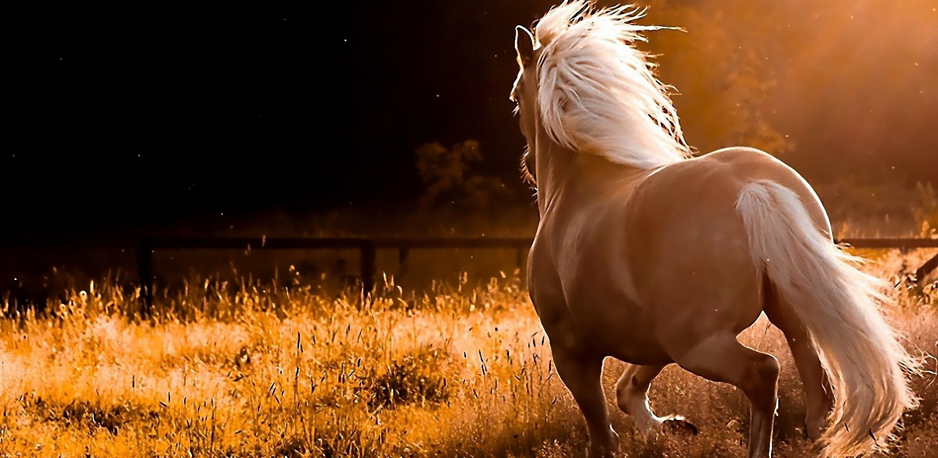What was the only horse after which a breed was named?