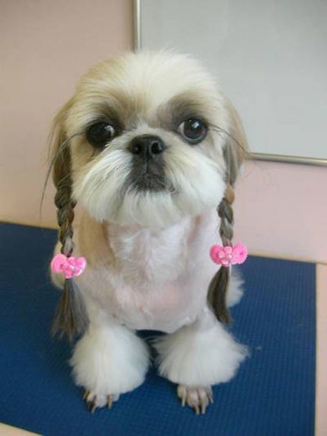 cute hairstyle photo dog
