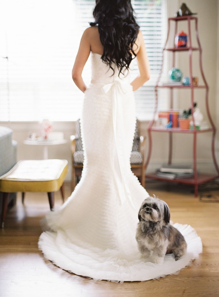 funny dog wedding dress