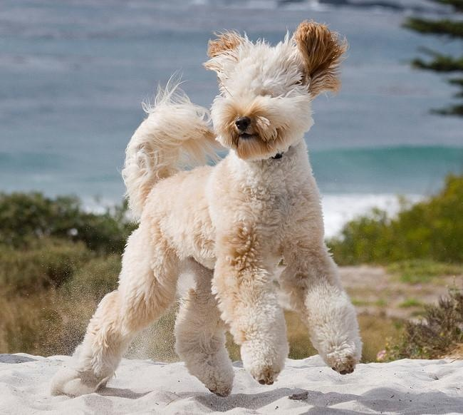 Pet Travel Scams during Coronavirus and How to Avoid Them 3