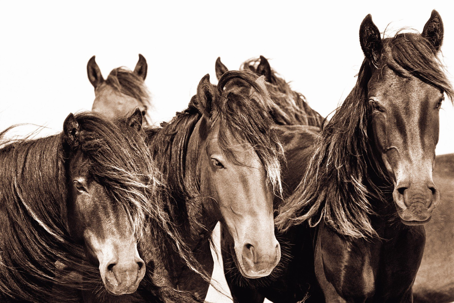 What is the smallest breed of horse?