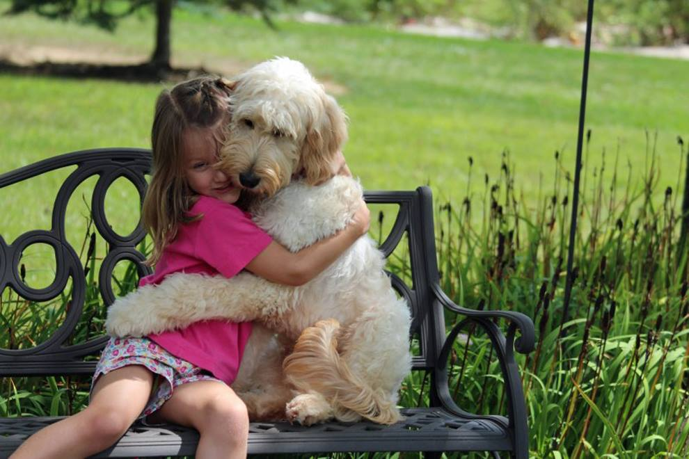 What are the differences - Goldendoodle Versus Labradoodle ? 2