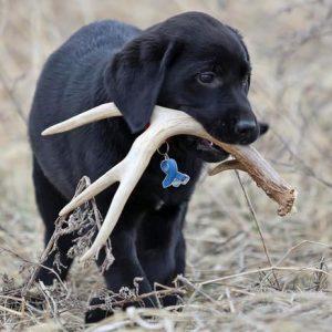 To hunt animals