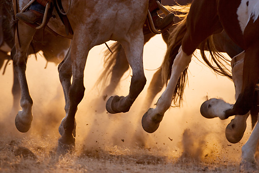 What is the 'fetlock' wrongly called?