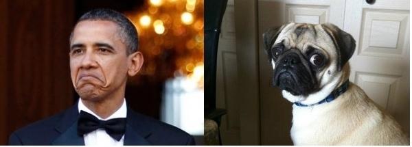 obama and pug