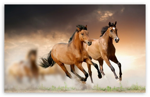 The hardest horse quiz youll ever take what are dapples ccuart Gallery