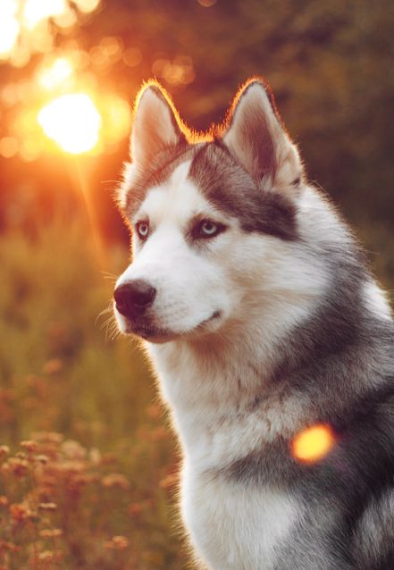 Siberian huskies saved a town during an epidemic in 1925. Where was that town?