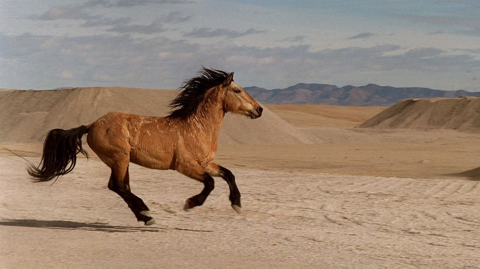 What is a species of wild horse?