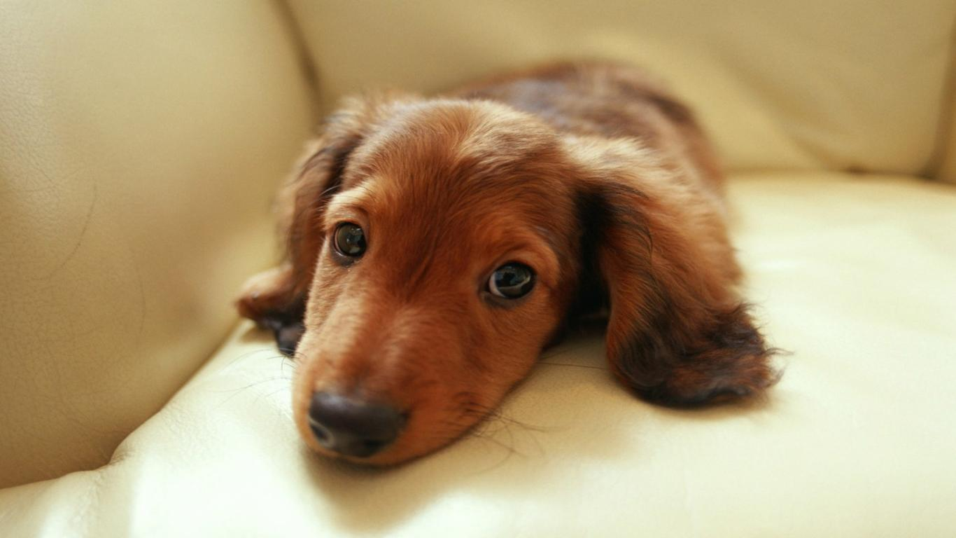 10 best dachshund dog names for Best dogs for you