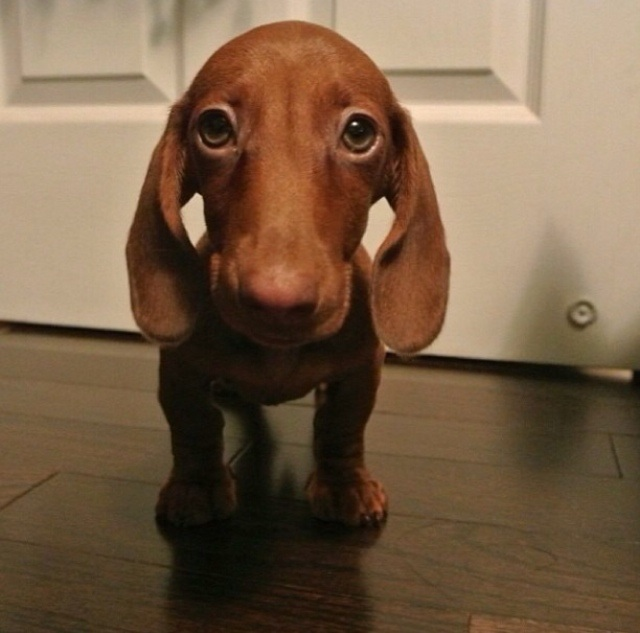 Funny Names For Weenie Dogs