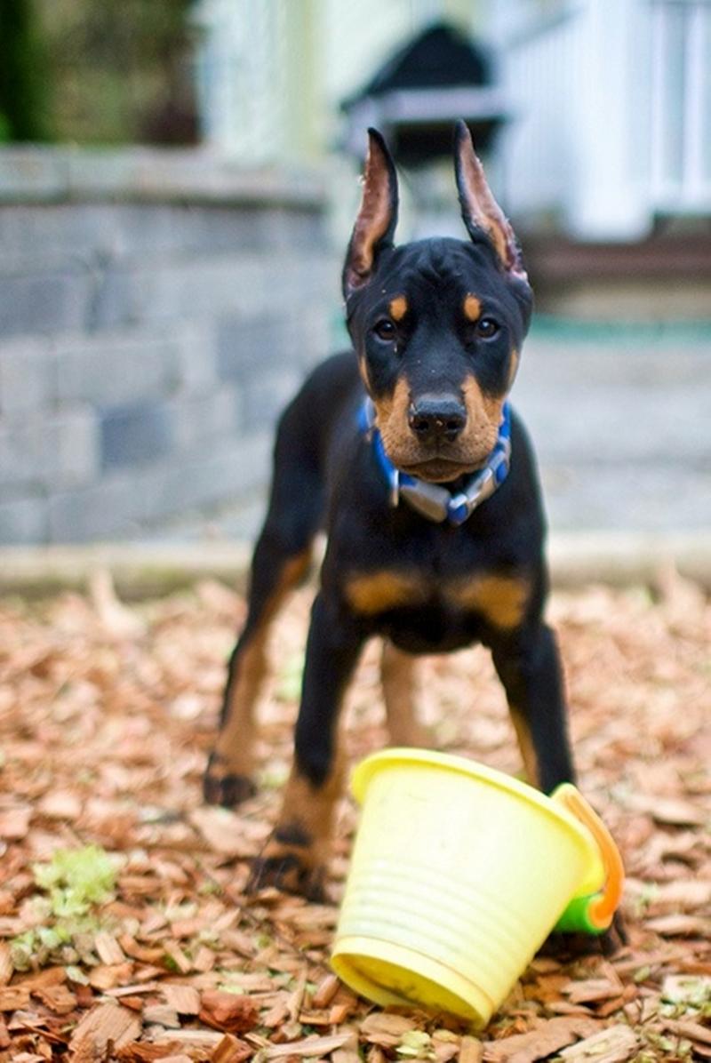 Best Dog Rescue