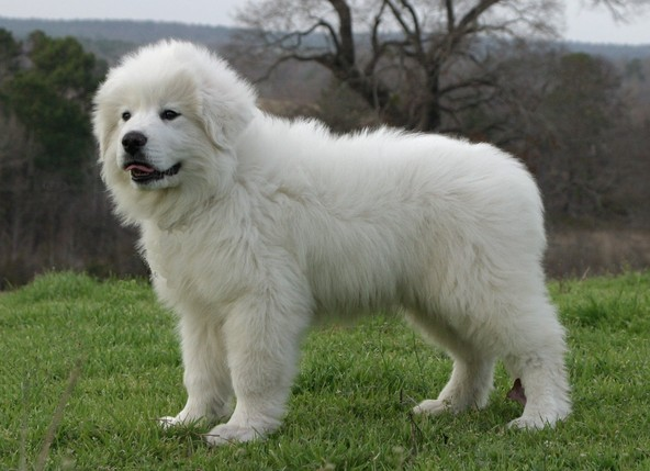 Which Breed Of Dog Is this?