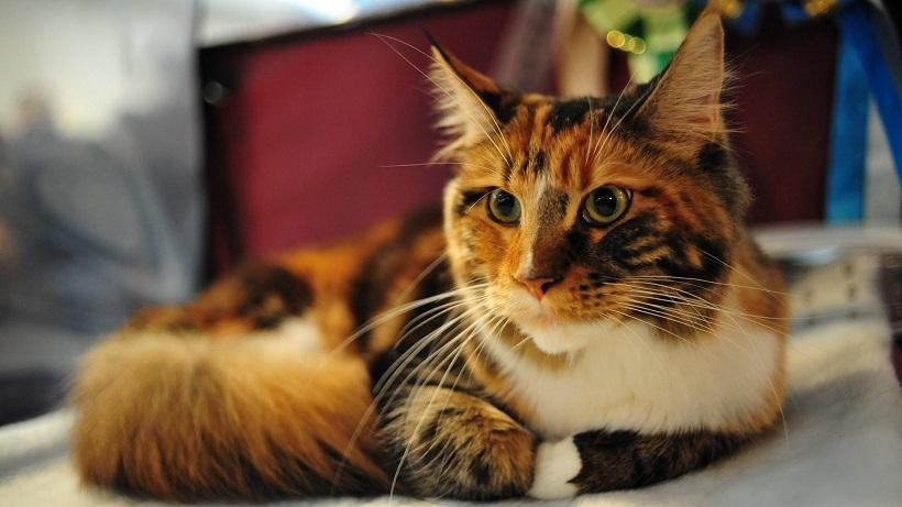 Zen Cat Names