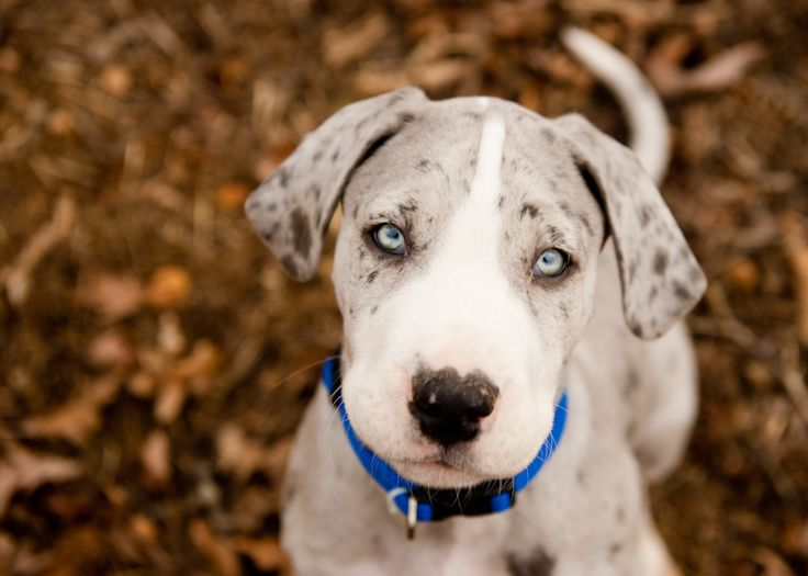Female Dog Names For Blue Eyes