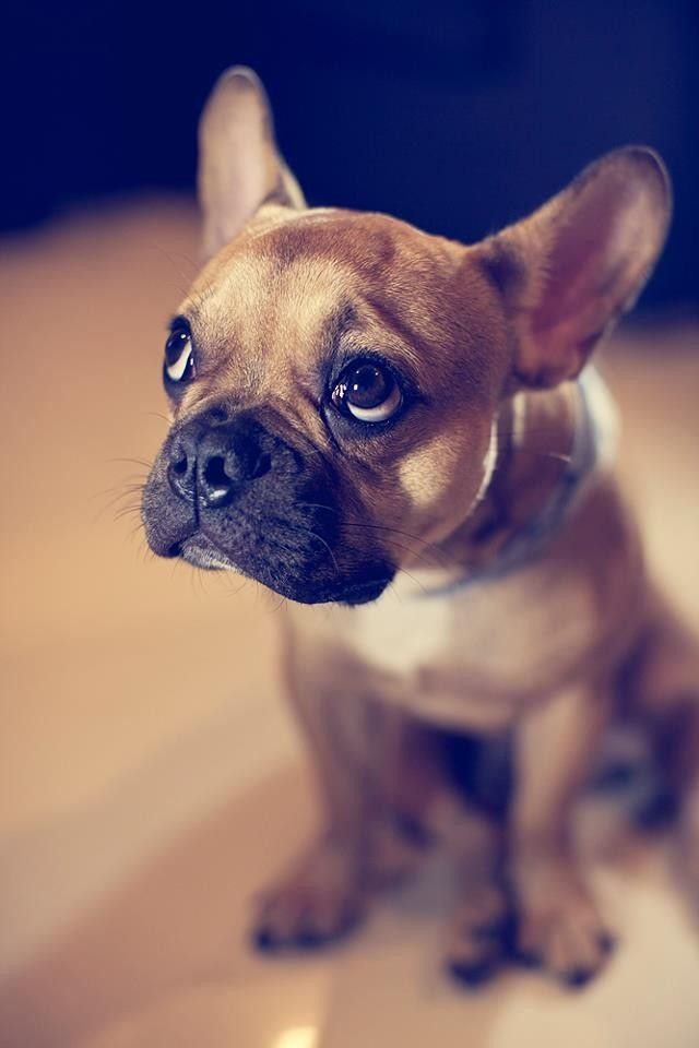 cute puppy eyes