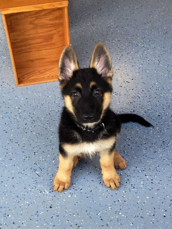 cute puppy listen