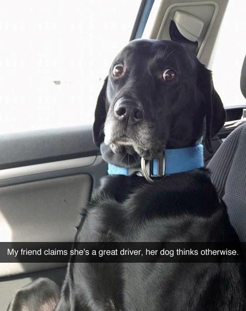 dog eyes photo