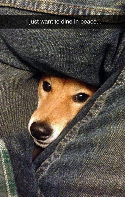 funny dog moment