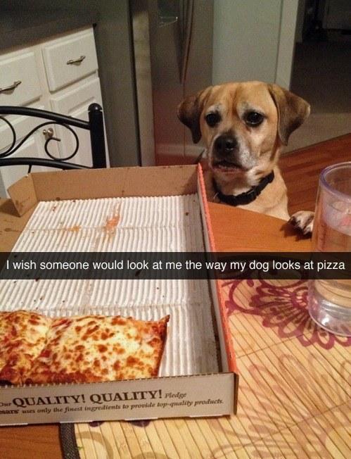 funny dog pizza