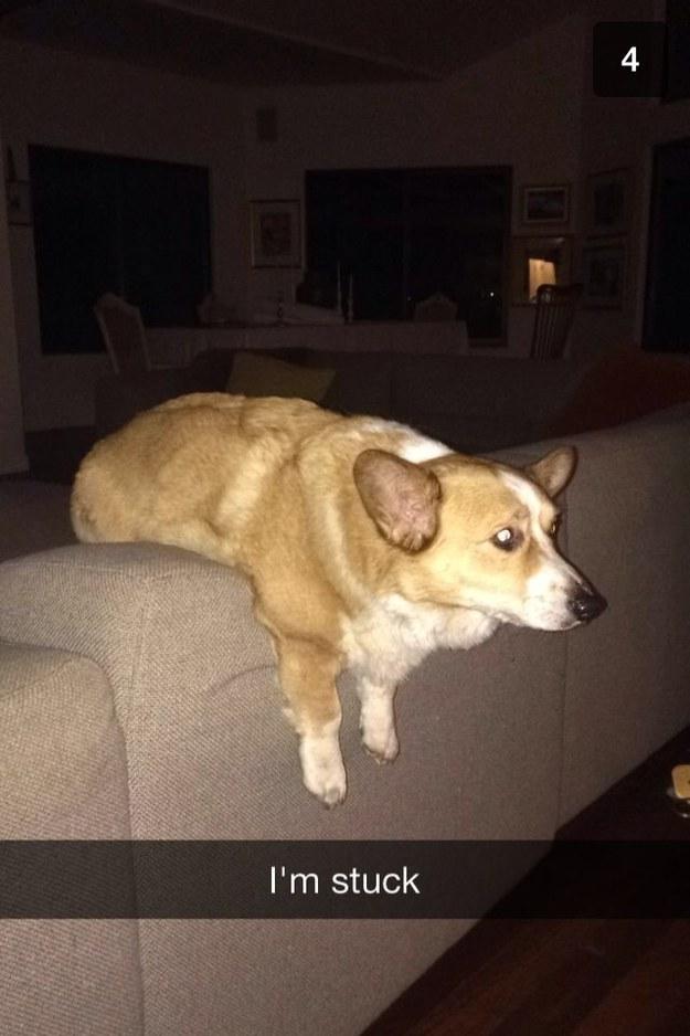 funny dog stuck