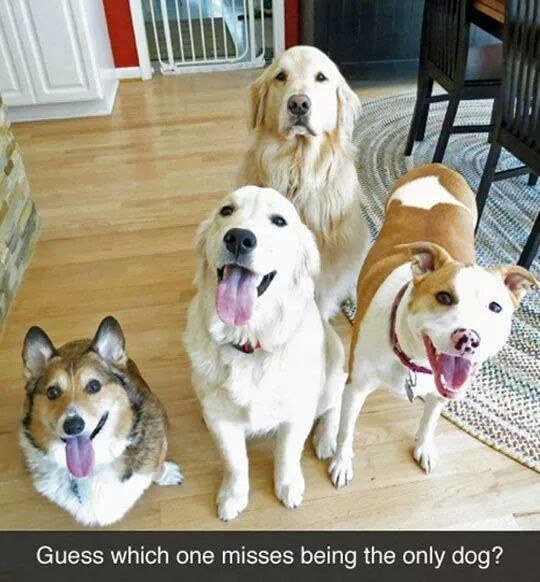 funny dogs photography