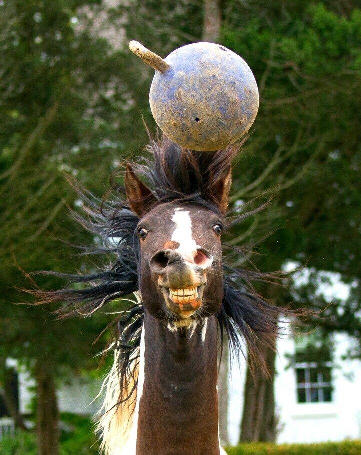 funny horse selfie pics