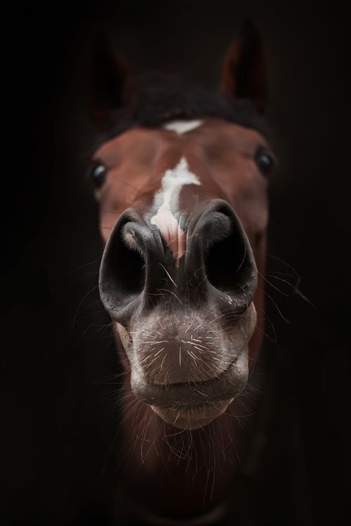 funny nose horse face