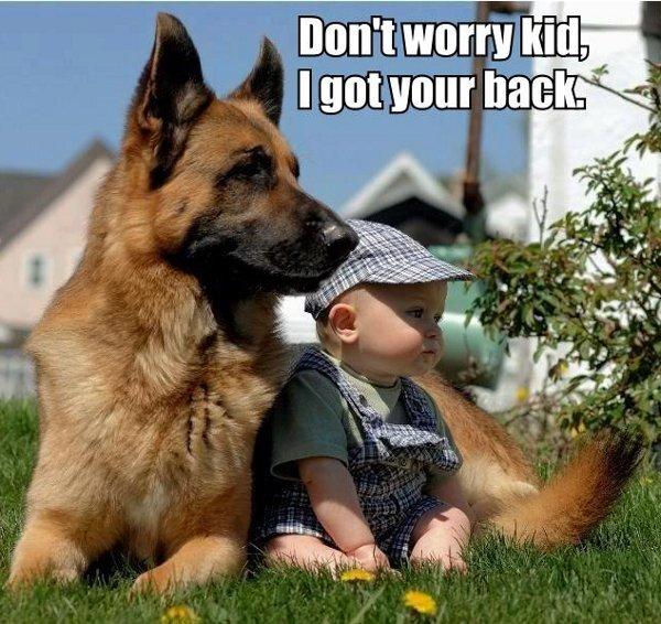 german shepherd protect kid