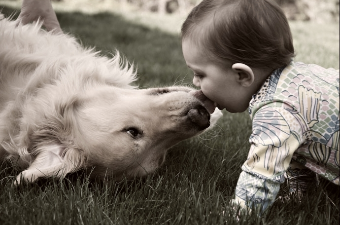 Dog Kisses Human