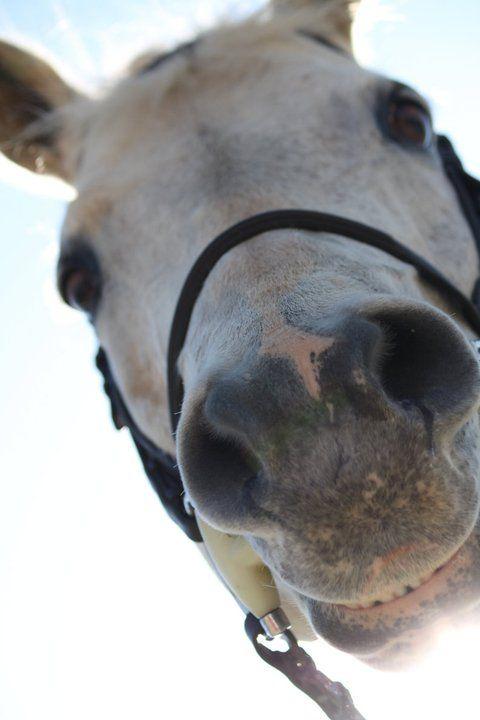 happy horse pics