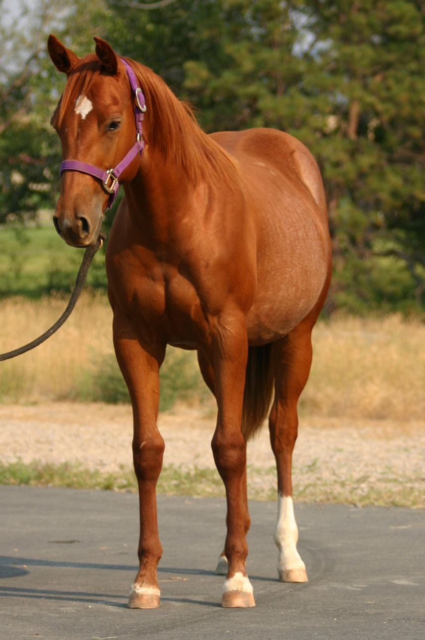 100 Most Popular Horse Names - photo#1