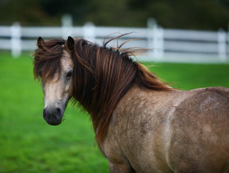 horse look pics