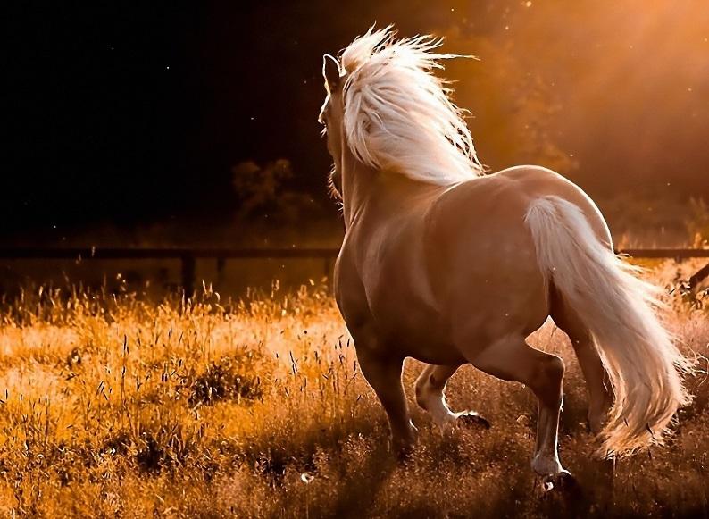 horse photo run